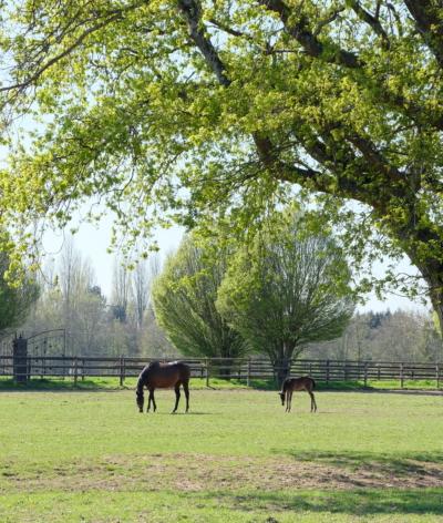 La mise à l'herbe de printemps chez le cheval