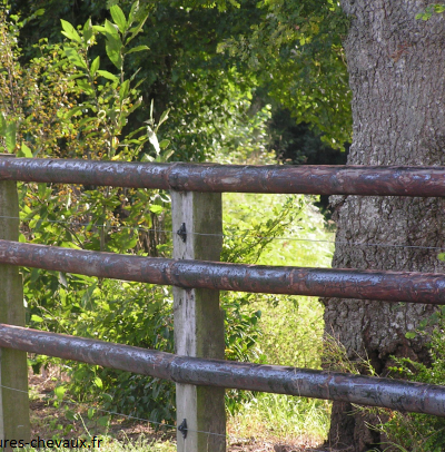 Alternatives aux clôtures en bois créosoté