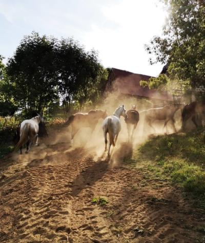 Le centre équestre CantaL'EquiLibre, à proximité d'Aurillac dans le Cantal, labellisé !