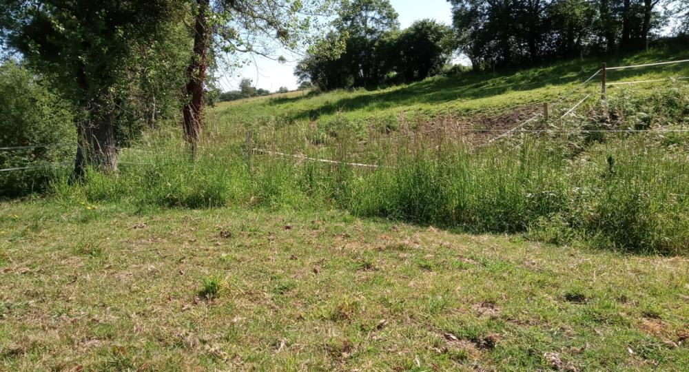 Des refus apparaissent dans mes parcelles d'herbe, que dois-je faire ?