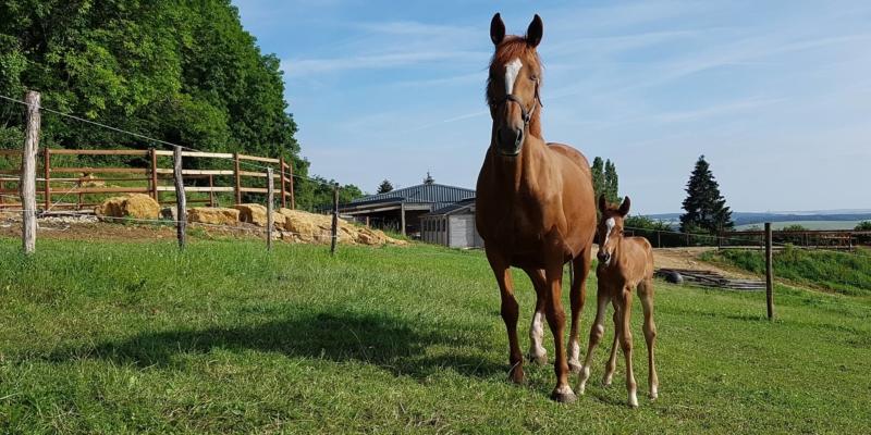 L'écurie du Soret, écurie de propriétaires et élevage, labellisé EquuRES à l'échelon Progression