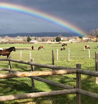 White River Ranch, un centre équestre dans la Loire, labellisé EquuRES!