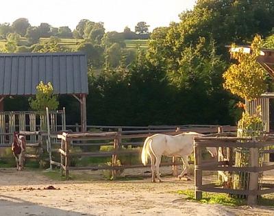 Willo Horse, une écurie active dans la Manche, labellisée EquuRES