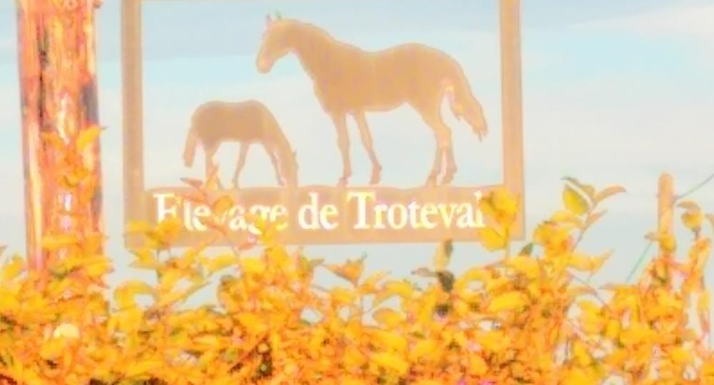 L'élevage de Troteval, aux portes de Caen, labellisé EquuRES