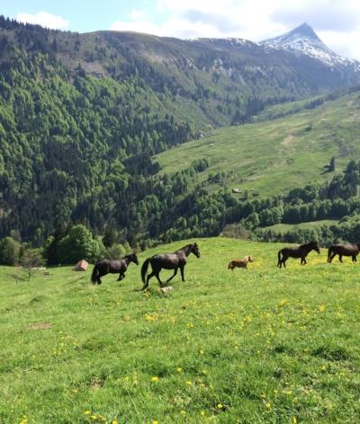 Les Crins du Leman, nouveau labellisé EquuRES en Haute Savoie