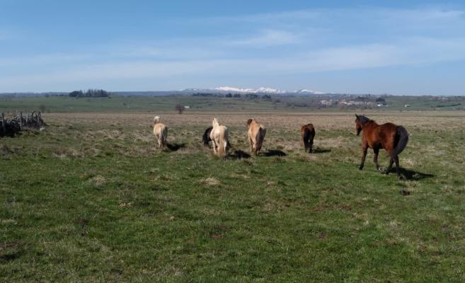 La ferme équestre de la Planèze, dans le Cantal, labellisée EquuRES