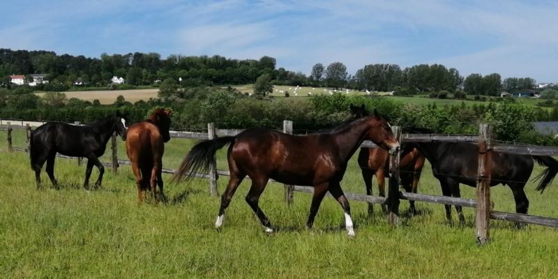 L'élevage d'Ecames, 1er labellisé EquuRES dans le Pas-de-Calais